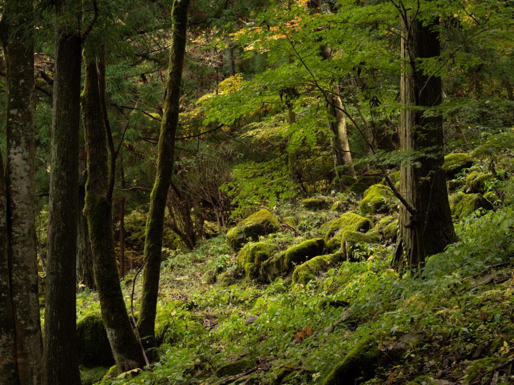 上林森林公園の登山道